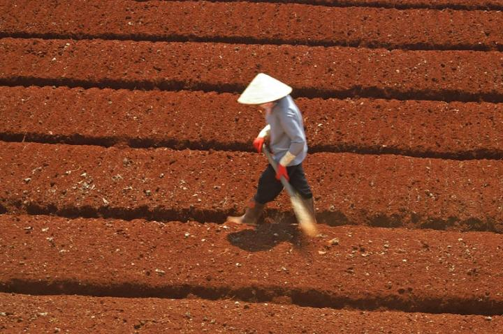 Preparing a field. Dalat, Vietnam.