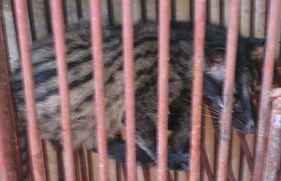 The source of the epidemic is thought to be the civet cat. This animal was served in restaurants throughout the region both before and after the outbreak, although briefly taken off the menu when it was discovered to be a carrier of the disease.