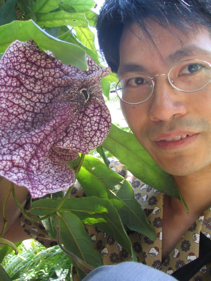 Me and Aristolochia westlandii at Kyoto Botanical Garden