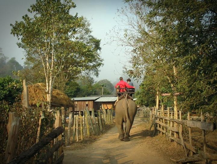 Tourist's exciting trip on elephant back