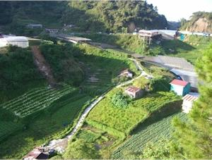 A Better Route To Cameron Highlands Thingsasian