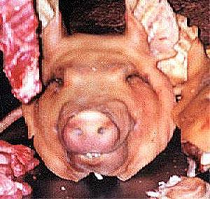 Pig Head Anyone?