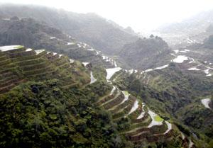 The spectacular Banaue rice terraces rise like giant steps to the sky.