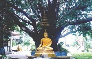 Buddha Under a Bodi Tree at Niwet Dhamma Prawat