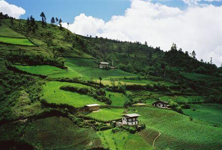 A lush, green terraced hillside
