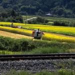 Rice is Japan's most important agricultural crop. And although only 15% of Japan's landmass is suitable for cultivation, 14 million acres are planted with rice, many of them postage-stamp sized family farms nestled in vacant lots between suburban buildings.