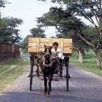 Horse cart, Bagan, Burma.