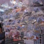 Goldfish Market.