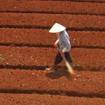 Preparing a field. Dalat, Vietnam.