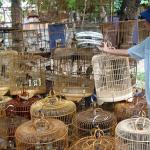 Things not to buy in Hue. Vietnamese forests are nearly void of wildlife due to the exotic pet trade and bushmeat trade.