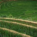 Rice paddies near Cat Cat Village