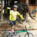 Elephant and Bike Friday Tikit bicycle - both utterly reliable and zero emission transports!