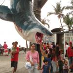 The hanging shark at Baywalk.