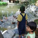 My children looking at the ducks in the pond