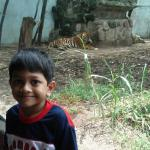Tiger in the background