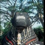 The shrine of Nandi the Bull, Mysore, India.