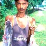 Nagaon, Assam, India: The rare and succulent Chital fish is sold by the roadside, Dharantul village.