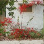 Flowers in ruins