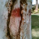 cut on a tree
