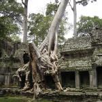 Tomb Raider Temple, Angkor Wat   CAMBODIA
