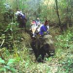 Riding elephants through the jungle in Thailand