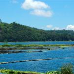 Philippines, Mindanao, Lake Sebu Fish Pens.