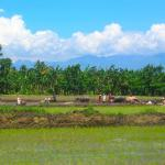 Philippines, Mindanao Ricefield, Allah Valley, South Cotabato.