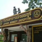 The world's first Monkey Hospital, located in the city's zoo, Lopburi, 160km north of Bangkok,Thailand.