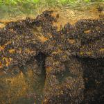 Philippines, Mindanao, Samal Island. Igacos batcave.