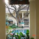 One of two poolside tamarind trees with histories predating the original hotel.