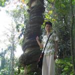 Me in front of a tree strangled by the vine Phytocrene macrophylla