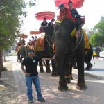 Elephants carrying tourists