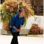 bearing the wage (Guizhou province)