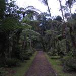 Cibodas Botanic Garden