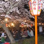 Ueno Park's sakura viewing party