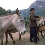 Unloading the mules at Dharapuri (7,700'), Nepal.