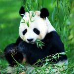 Wolong Nature Reserve mainly protects the ecosystem of the forest in southwest China and rare animals like Giant Panda.