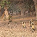 We saw plenty of monkeys but no tigers.