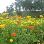 Flower Garden - Dalat, Vietnam