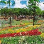 Flowers - Dalat, Vietnam