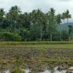Buhay Mindanaw(Life in Mindanao)