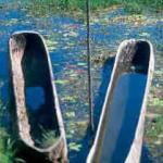 Bedugul, Bali (Indonesia) Dugout canoes on Lake Bratan