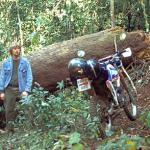 Chang Dao, Thailand. Riding in the forest obstacles come in all shapes and sizes!