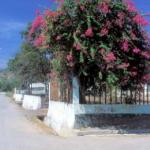 MANATUTO, EAST TIMOR. Bougainvillea trees are just about the only things not detroyed by the Indonesians during their retreat in 1999.