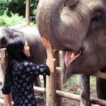 At the Elephant Nature Park, Lek spends a good few hours feeding the elephants, which line up like pigs at a trough.