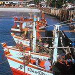 Fishing vessels lined up to discharge their catches at the pier in Hua Hin