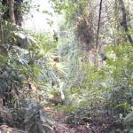Jungle near Merang