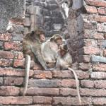 A trio of monkeys watch tourists at Prang Sam Yort.