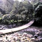 Footbridge over a ravine in Northwestern Thailand.