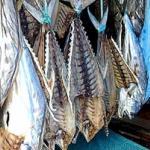 Hanging fish, Bang Bao village, Koh Chang, Thailand.